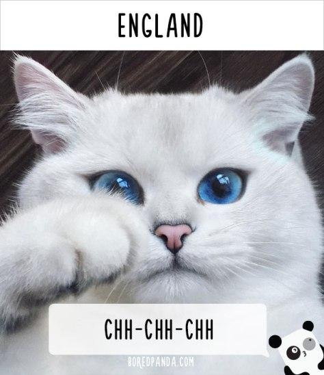cat_calling09