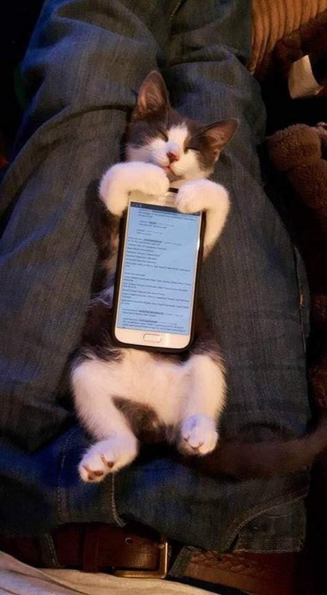 【猫画像】猫型スマホケース