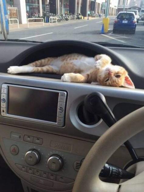 【猫画像】ピッタリ!?