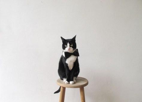 【猫画像】キリッ!
