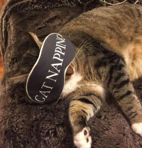 【猫画像】眠りに集中?