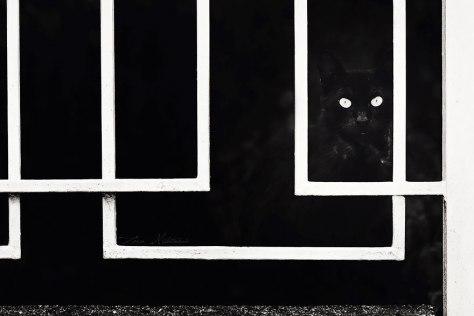 mono_cat_photo11