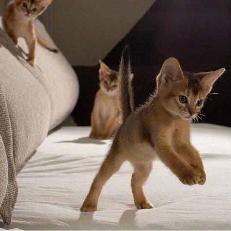 【猫画像】着地した瞬間