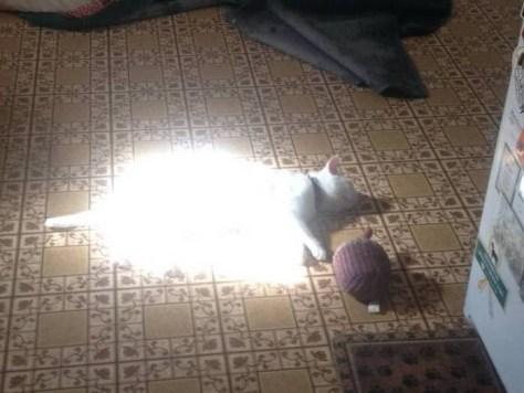 【猫画像】ピカーー!!
