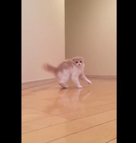 kitten_strange_pose02
