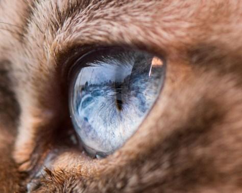 【猫画像】猫の目