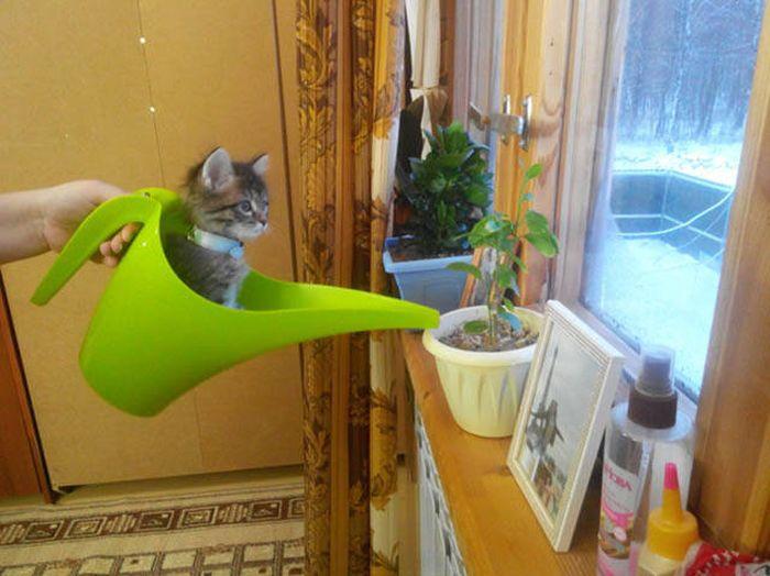 【猫画像】乗り物じゃない!
