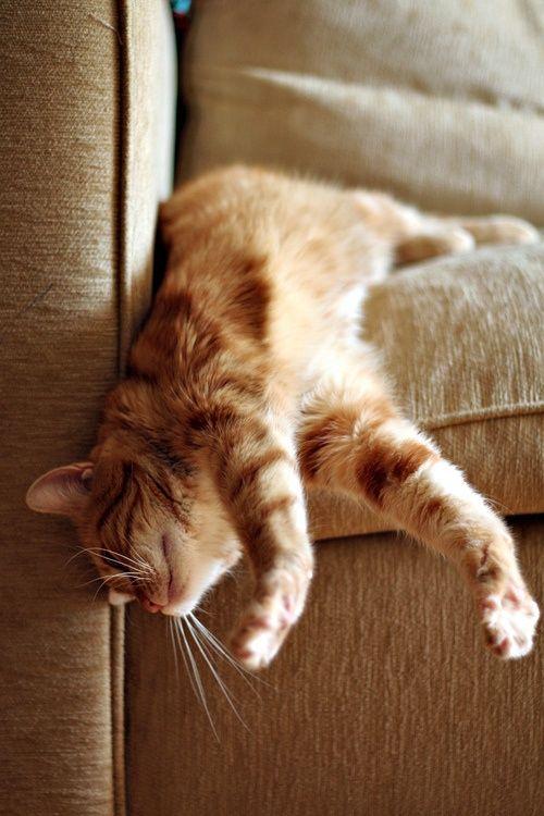 【猫画像】落ちそうで落ちない!?