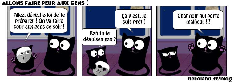 Chats Images Image Chat Image Drole Chat Photo De Chat Drole