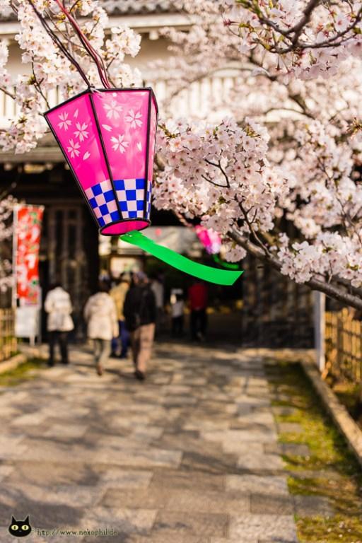 Eingang Burg Kishiwada / Sakura