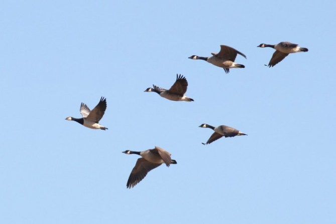 Rarity Round-Up: A Four Day Birding Adventure by Alex