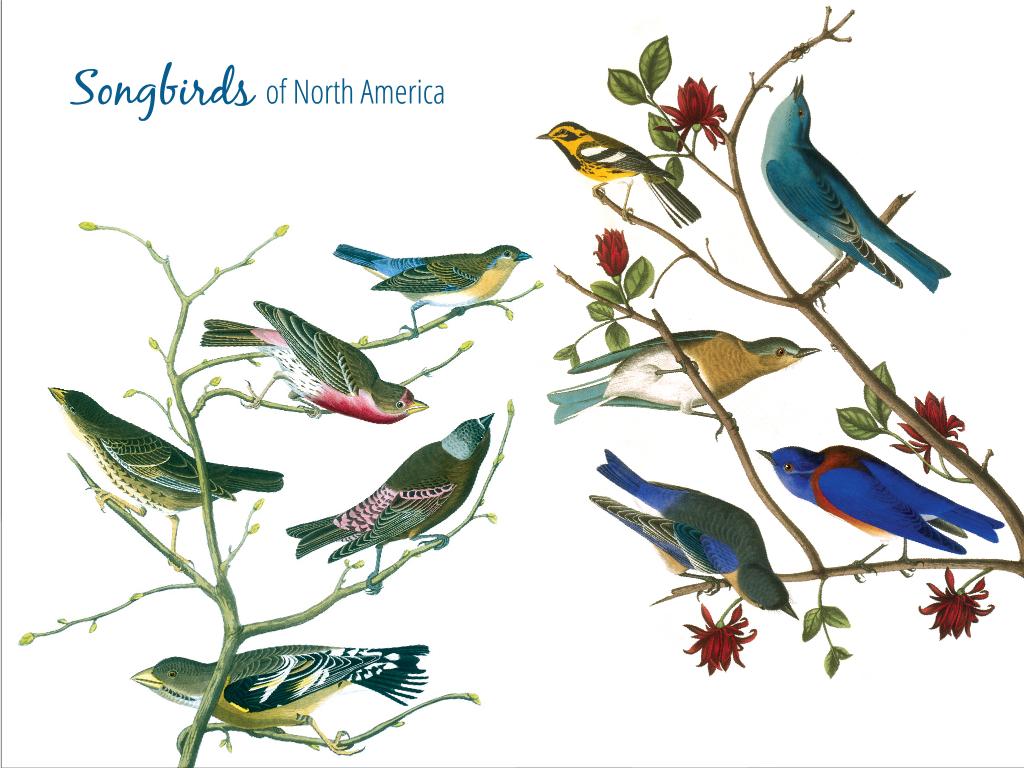 American Songbirds están siendo eliminados por plaguicidas prohibidos | Sueños comunes