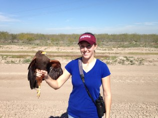 Harris's Hawk in hand