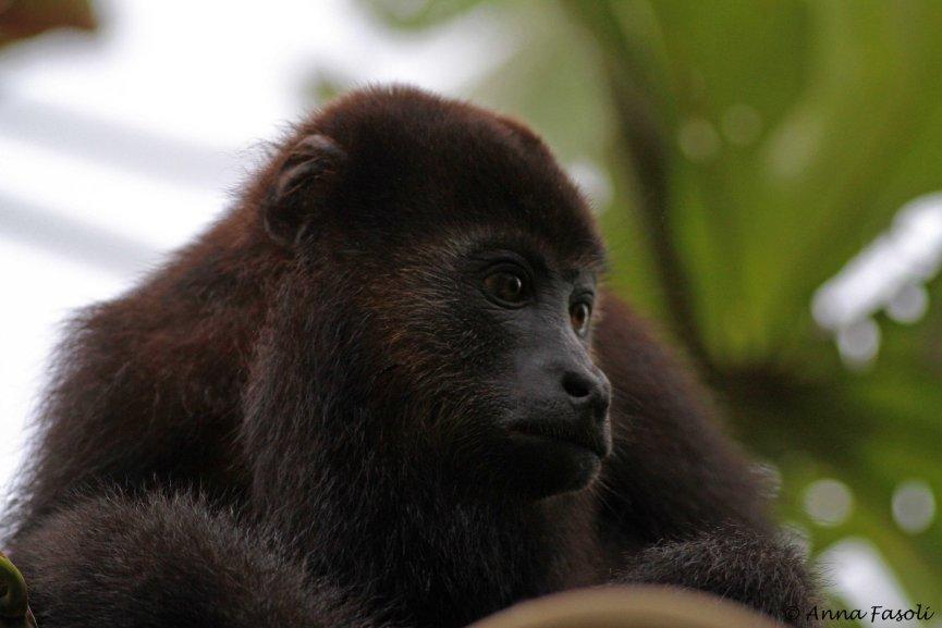 112214 owler Monkey 09