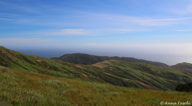 Area where peregine was hunting; another fantastic view on Santa Rosa
