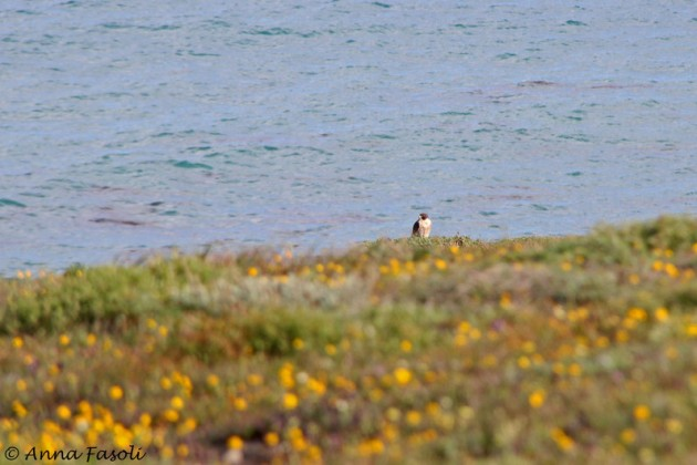 Peregrine Falcon sitting right were I want to be...