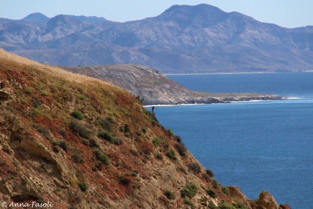 Peregrine Falcon (with Santa Cruz in distance) at Bonn Point, Santa Rosa Island