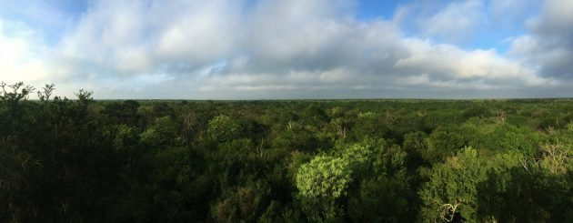 The view of extensive subtropical woodland from the Tree Tower at Santa Ana NWR (Photo by Alex Lamoreaux)