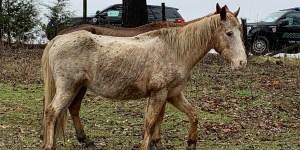 animal neglect glidewell lee county
