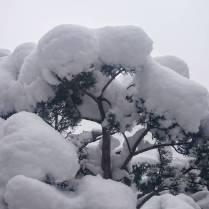 #springsession #montana #essayepaspu #ademain #frisek