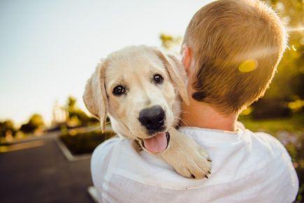 pas-zagrljaj-sreća