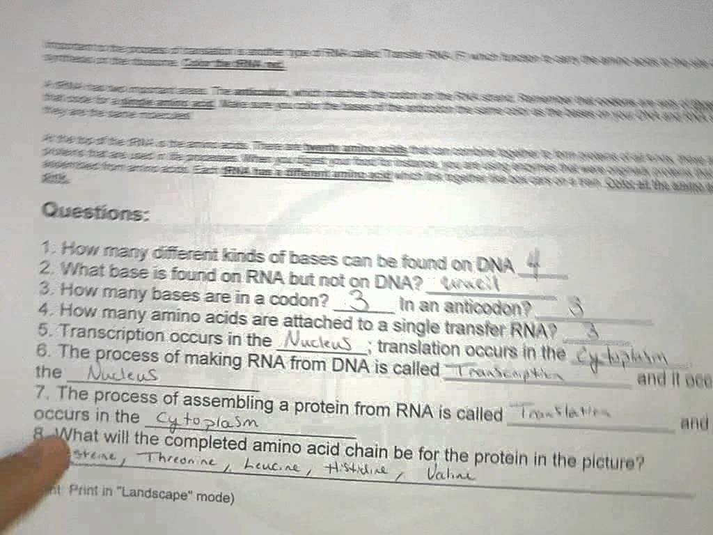 Dna Coloring Transcription And Translation Key