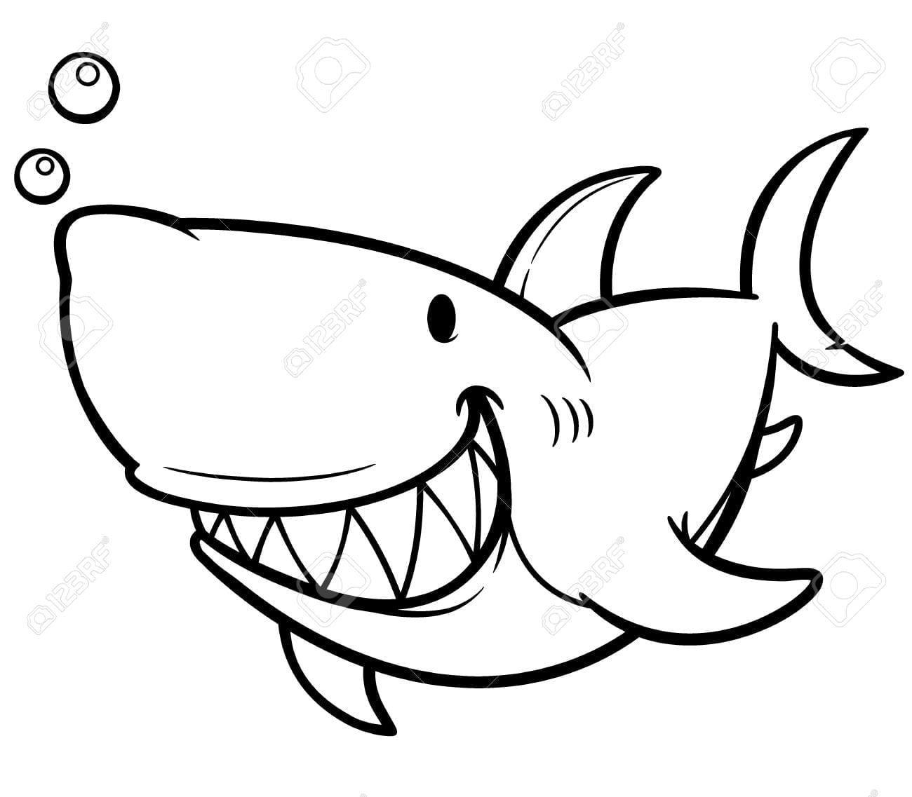 Shark Anatomy Worksheet Coloring