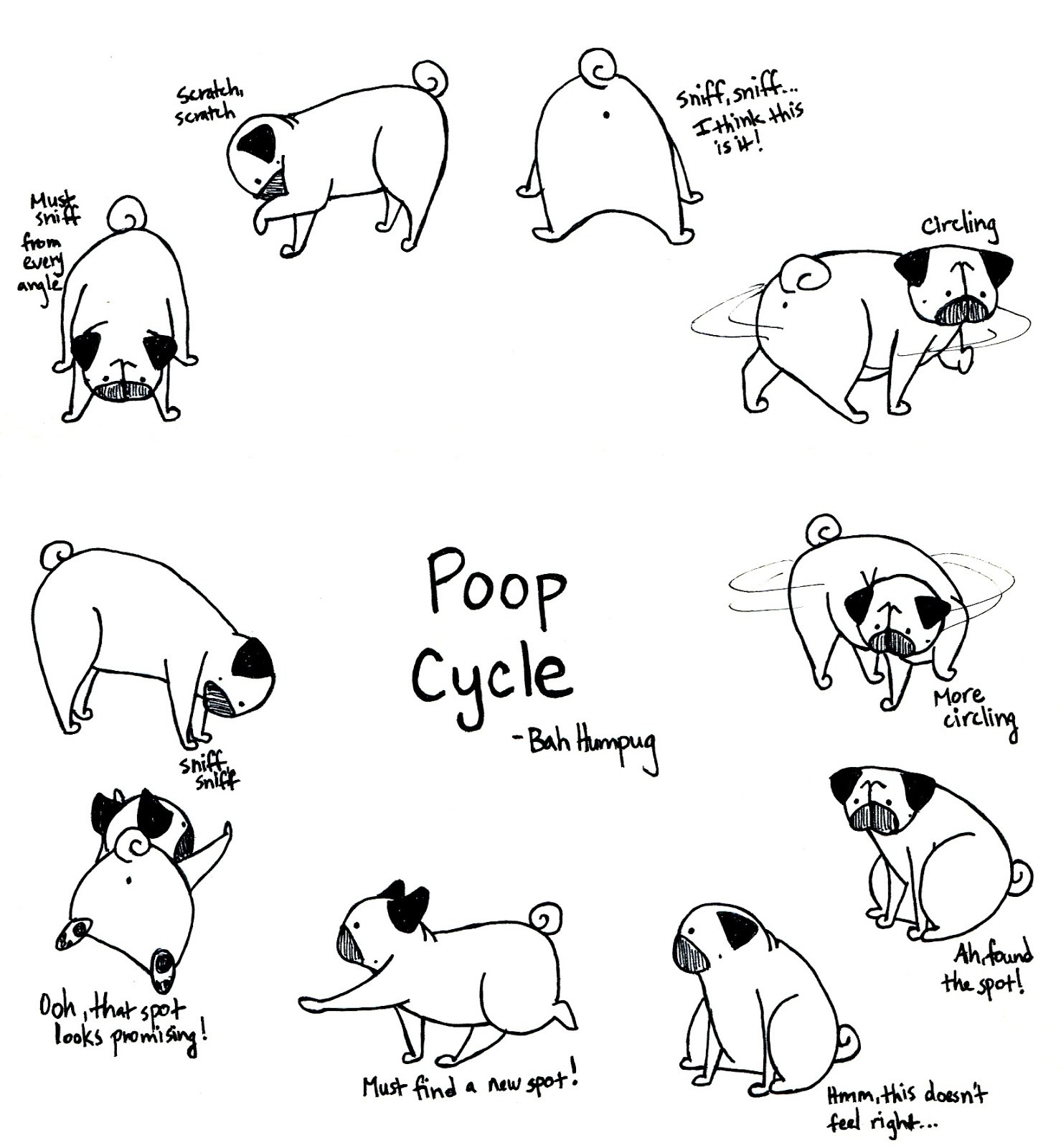 Dog Life Cycle Worksheet