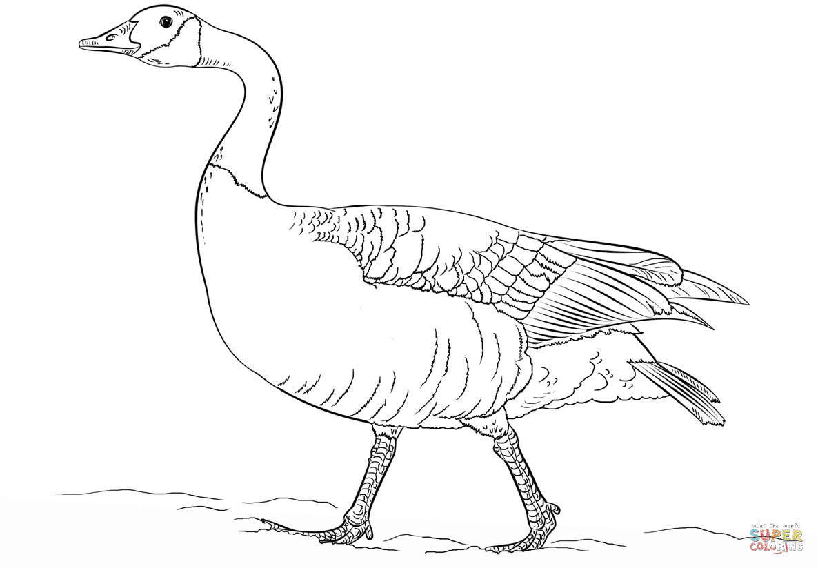 Bird Coloring Pages Free Printable Realistic Neo Coloring