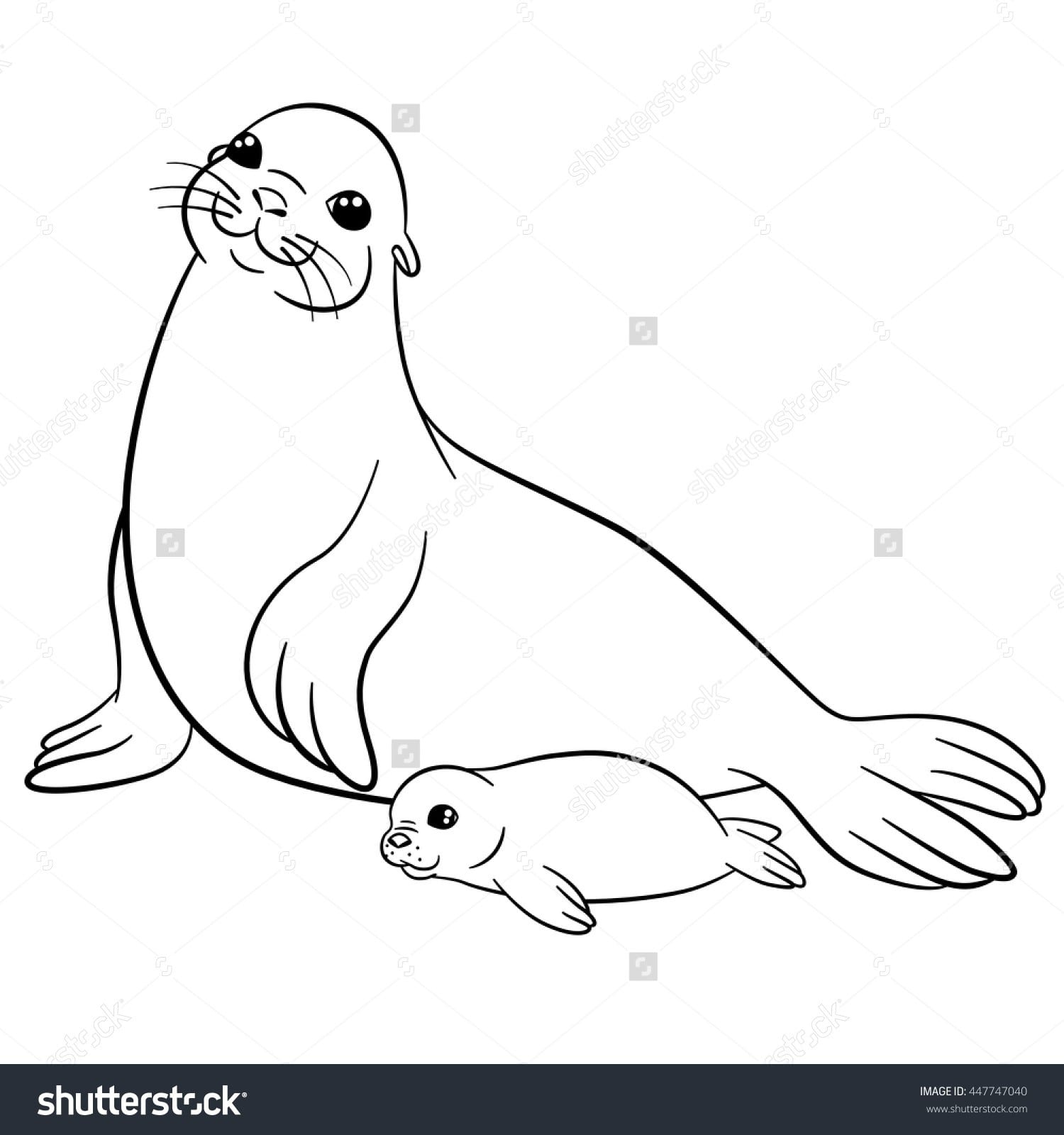 Seal Pictures To Color