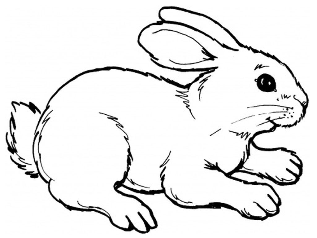 Rabbit Coloring Sheet