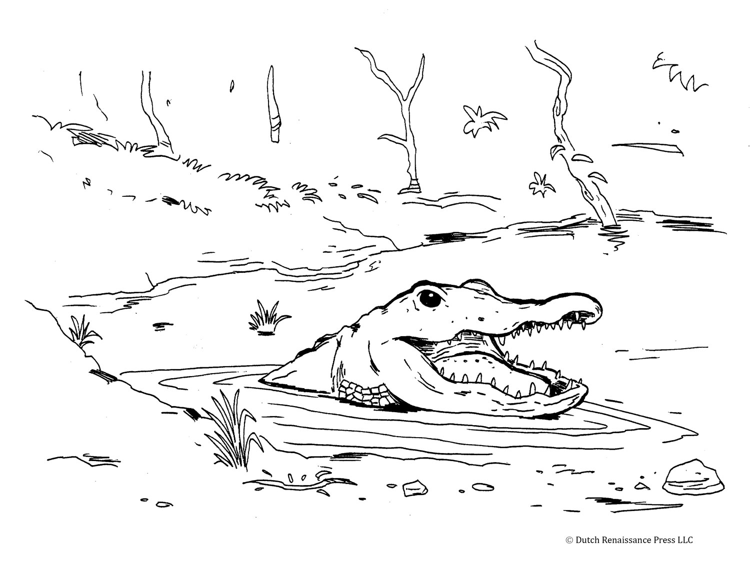 Alligator Coloring Pages For Kids