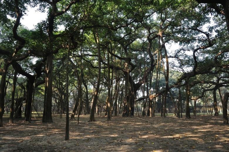 Acharya Jagadish Chandra Bose in the Botanical Garden of India, Kolkata, India