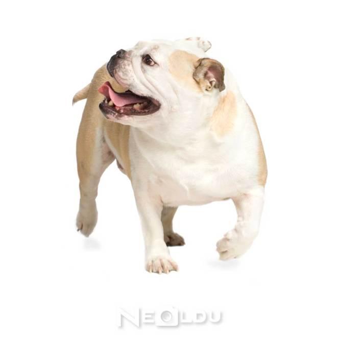 Diyet köpek maması
