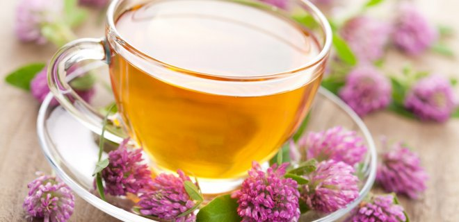 ekinezya 003 - Plants Good For Bronchitis