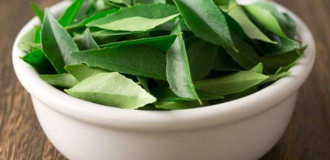 kori yapragi - Plants From Diabetes