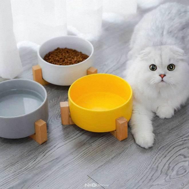 En İyi Kedi Mama ve Su Kabı Modelleri