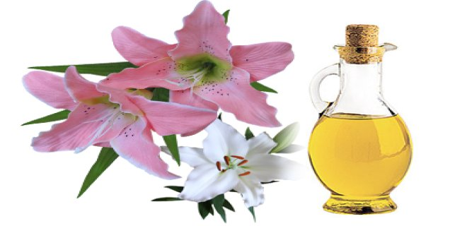 zambak yagi - Lily Oil Benefits