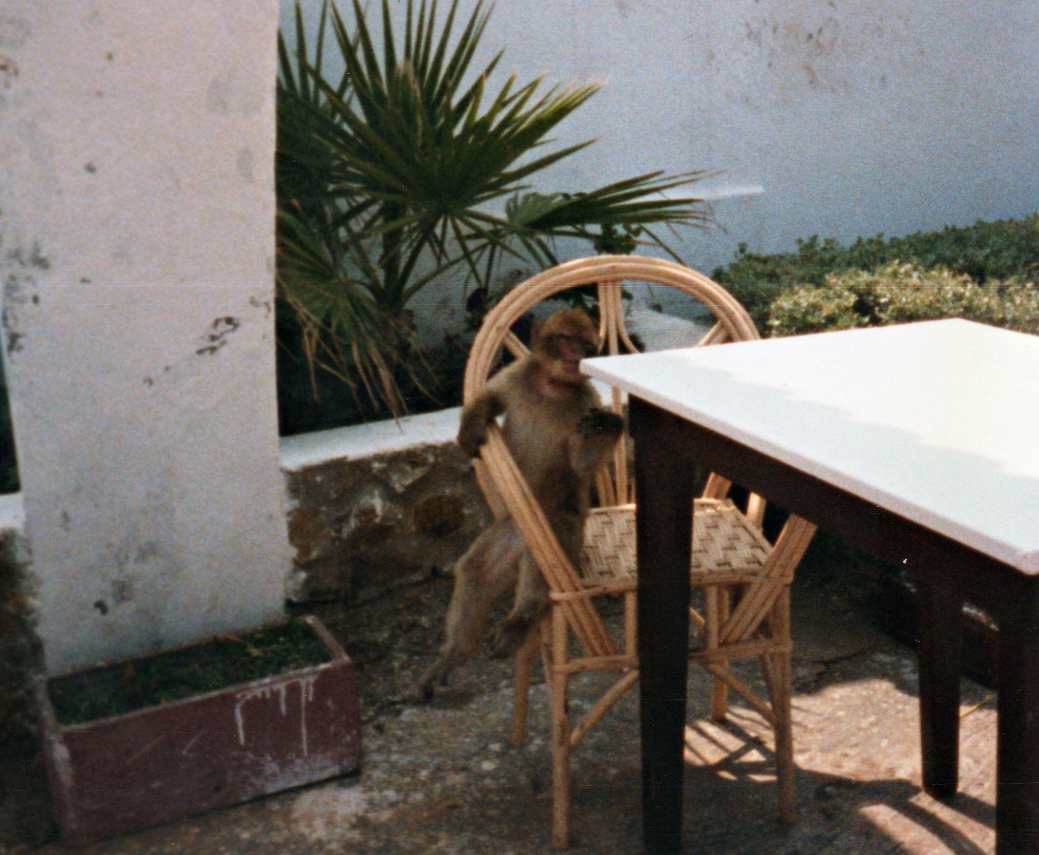 Restaurant, Barbary Ape