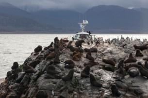 Beagle Channel, Sea Lions, Cormorants