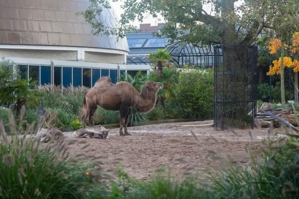Amsterdam Artis Zoo