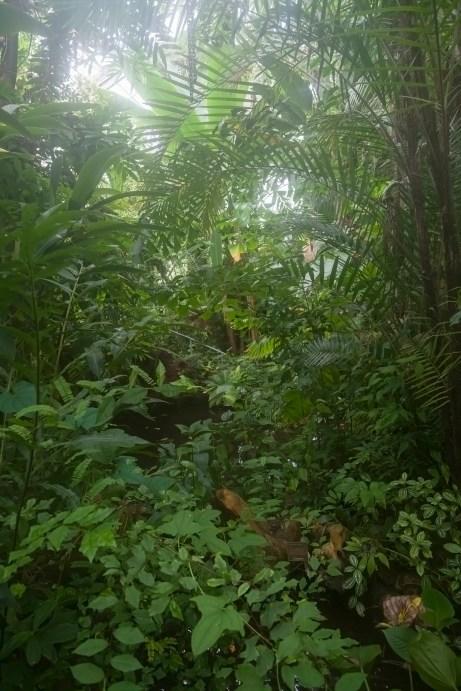 Hortus Botanicus, Amsterdam