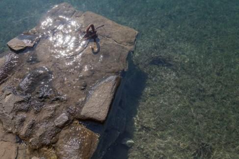 Delos Water