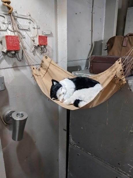 Ship's Cat In A Hammock