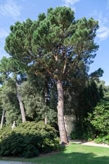 Emmanuel Liais Park
