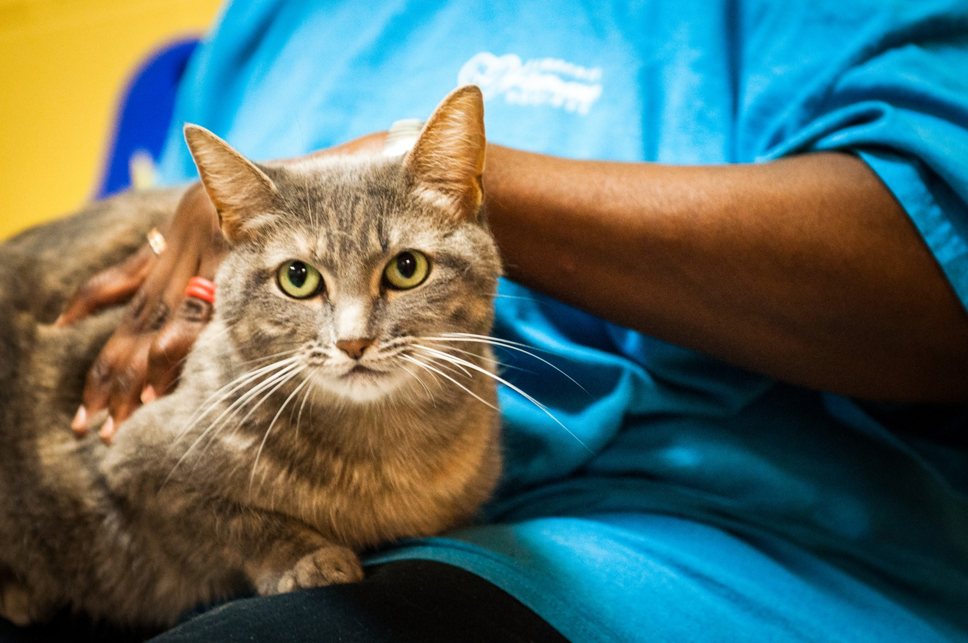 The Lawrence Humane Society has cared for more than 40,000 animals in the past few years alone!