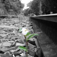 Resiliencia o la actitud de las actitudes positivas