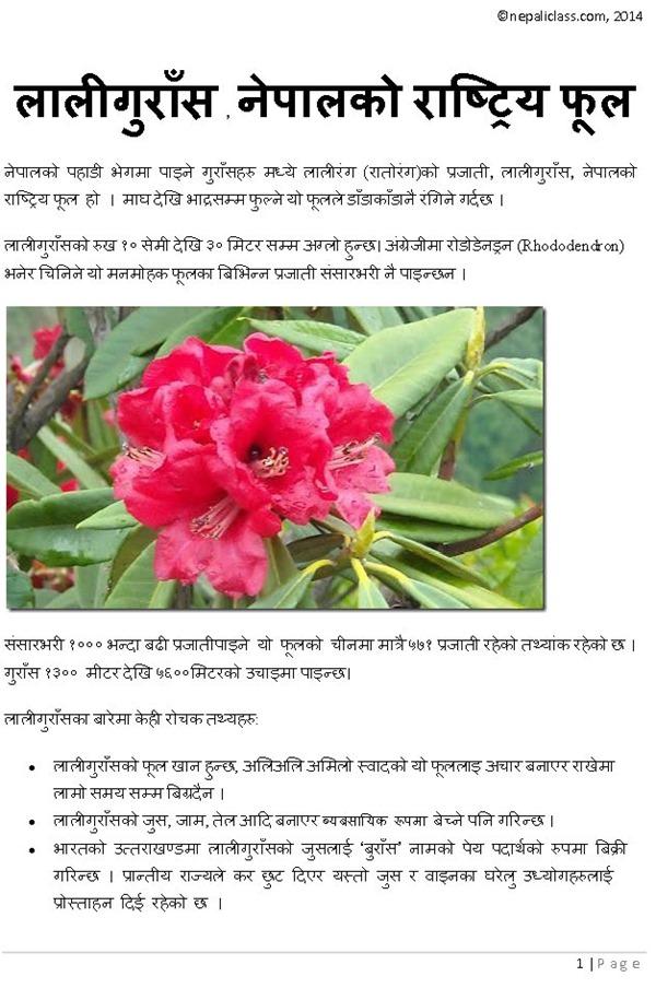 Rhododendron- lali gurash nepaliclass_Page_1