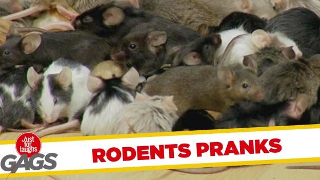Best Rodents Pranks