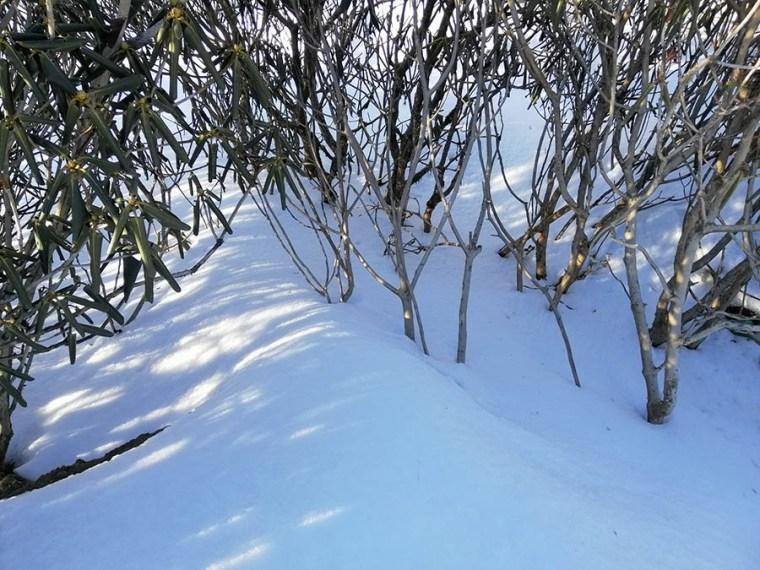 Snow in Kalinchowk